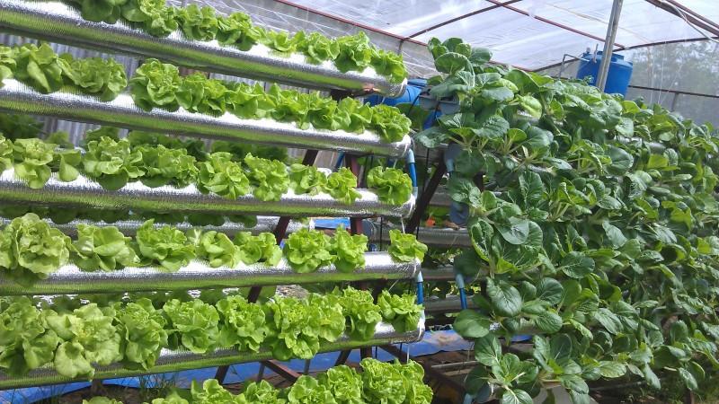 Dự án Khu NNCNC ngành trồng trọt và sau thu hoạch tại Củ Chi
