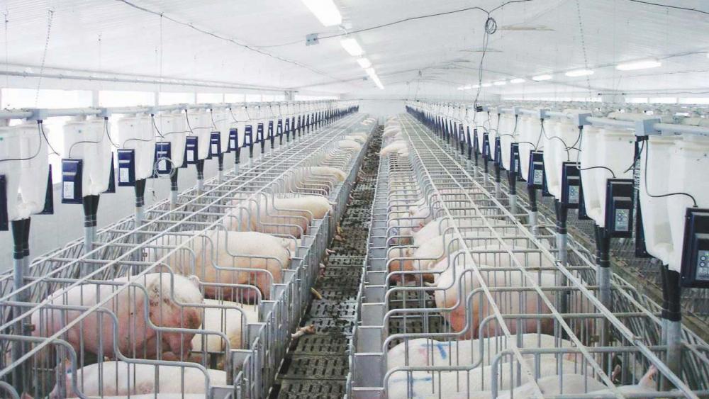 Dự án Khu NNCNC ngành chăn nuôi tại Bình Chánh